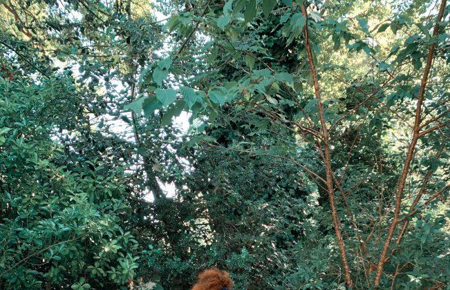 Freya Bramble-Carter & Pallas Kalamotusis Portrait